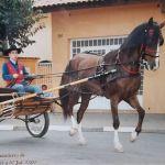 Domenico Dattola Profile Picture